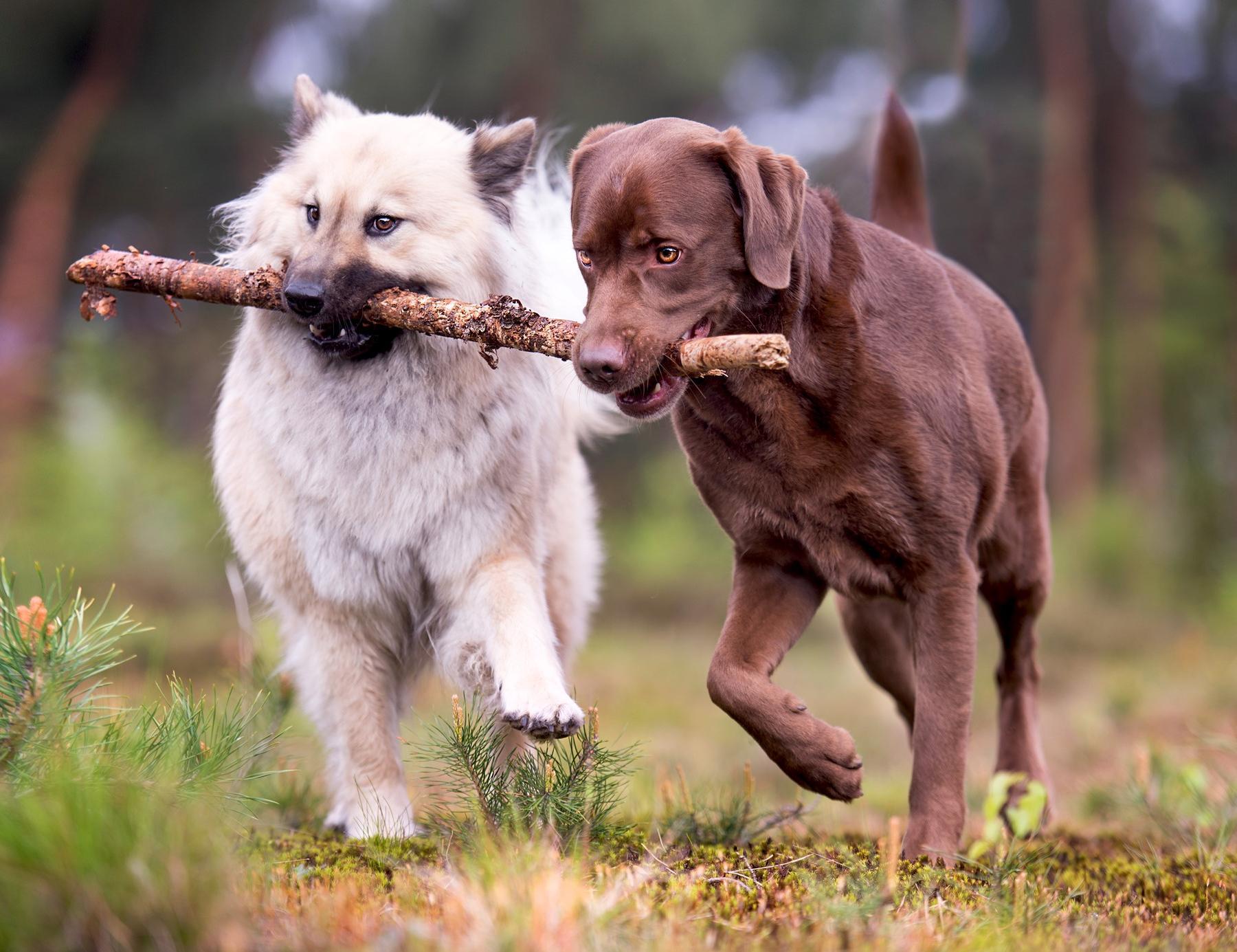 hundeschule solingen
